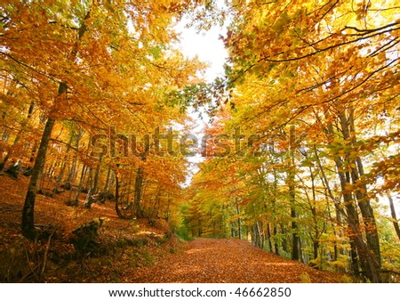 Gravel path leading into forest in autumn with gold foliage in primorska region in slovenia