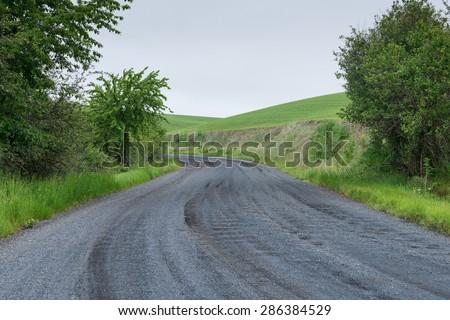 Gravel road curving through rolling hills, Elberton, Washington - stock photo