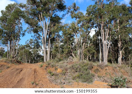 Gravel  road leading to the Crooked Brook national park in south western Australia  is rough and corrugated but well worth the drive to see amazing wild flowers. - stock photo