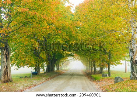 Gravel road through a row of trees in the early morning fog in early autumn, Stowe Vermont, USA - stock photo
