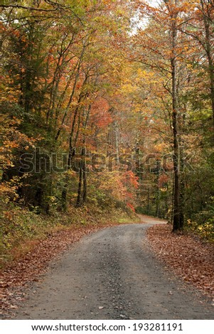 Gravel road with Fall colors in Elljay Georgia. - stock photo
