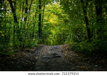 stock-photo-gravel-road-with-foliage-in-