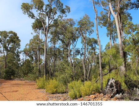 Gravel track between  rare Jarrah trees growing in a firewood collection area of the National park between Donnybrook and Capel south western Australia in mid winter. - stock photo