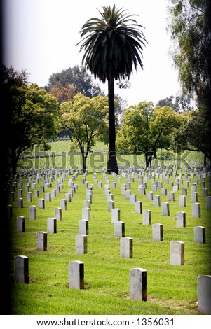 Graveyard and palm tree. - stock photo