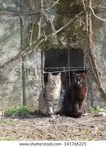 Gray and black cat - stock photo