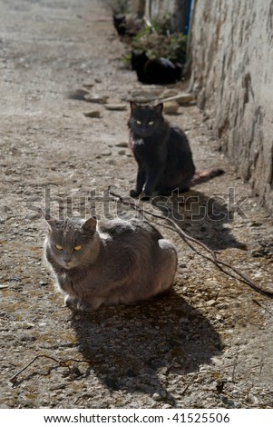 Gray and black cats sitting on the ground. - stock photo