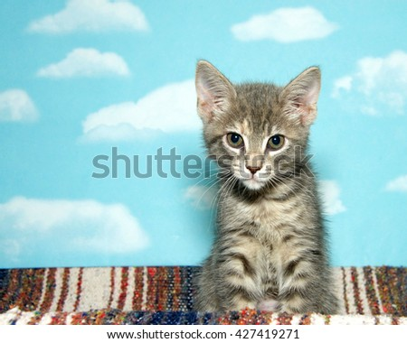 Gray and black stripped tabby kitten sitting on a stripped blanket blue background with white clouds - stock photo