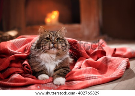 Gray and Black Tabby Cat Relaxing, Cat lying on the floor in a blanket - stock photo