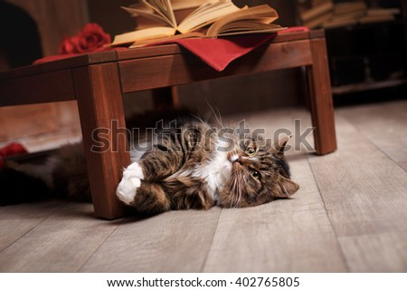 Gray and Black Tabby Cat Relaxing, tabby cat lying under the chair, on the floor - stock photo