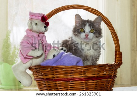 Gray and white kitten and a teddy bear sitting in a large wicker basket on the background of bright windows, a bright sunny day and a festive spring mood in the picture.