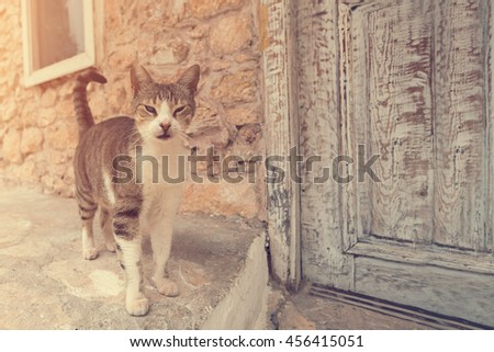 Gray and white tabby cat standing next to a wooden door on the street