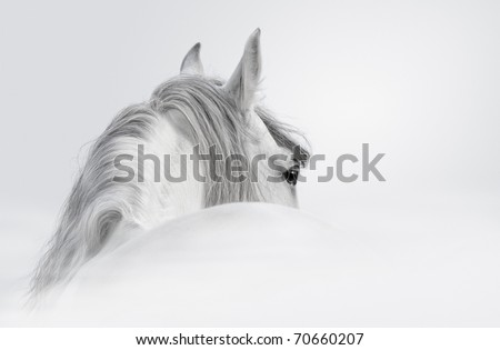 Gray Andalusian horse in a mist - stock photo