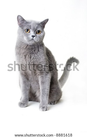 gray cat - stock photo