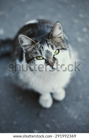 Gray cat close-up, outdoors - stock photo