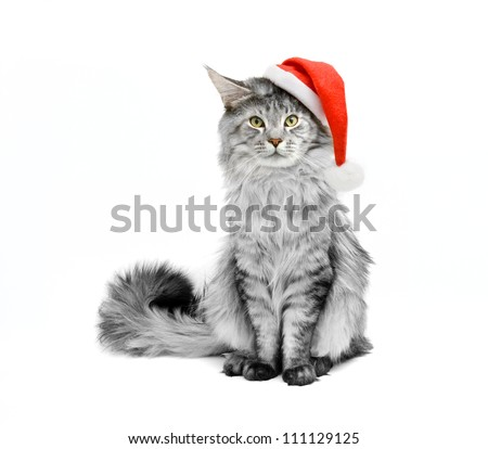 gray cat dressed as Santa Claus on a white background - stock photo