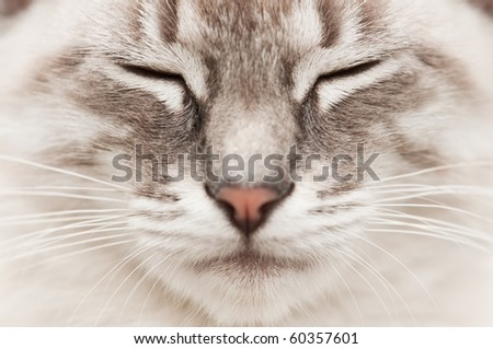 gray cat face close up - stock photo