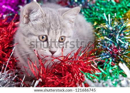 Gray cat in Christmas tinsel