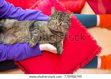 Gray cat lies on the hands of the woman.