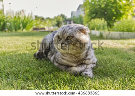 gray cat lying on the grass.
