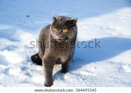 Gray cat on snow, winter, back yard - stock photo