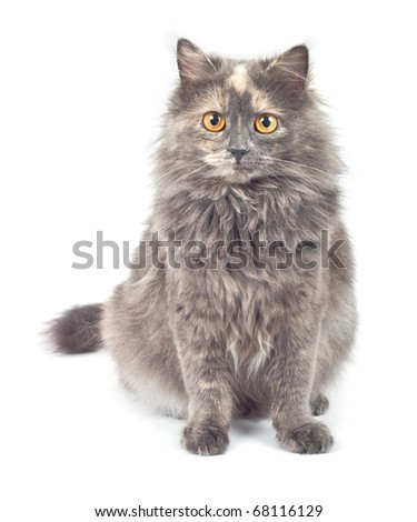 Gray cat on white background. - stock photo