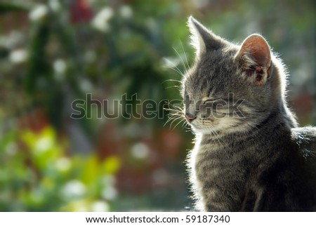 gray cat side view portrait in sunlight - stock photo