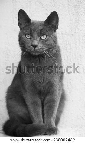 gray cat sitting