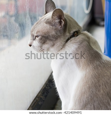 Gray cat sitting by the window lonely mood.selective focus. - stock photo