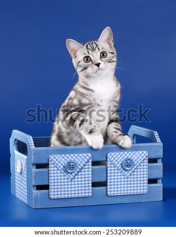 Gray cat sitting in a wooden box - stock photo