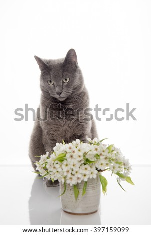 Gray Cat Sitting Next to Beautiful White Apple Blossoms Bouquet