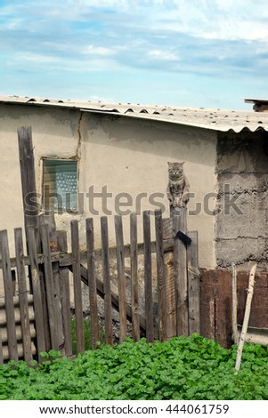 Gray cat sitting on a fence in the village. During the daytime in the summer. - stock photo