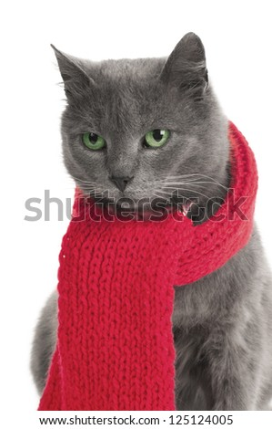gray cat with a red Scarf