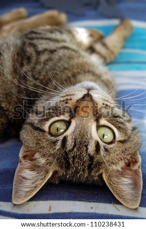 Gray cat with green eyes. Domestic animal portrait. - stock photo