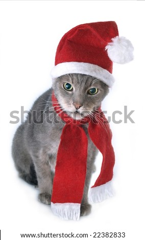 Gray Christmas cat portrait
