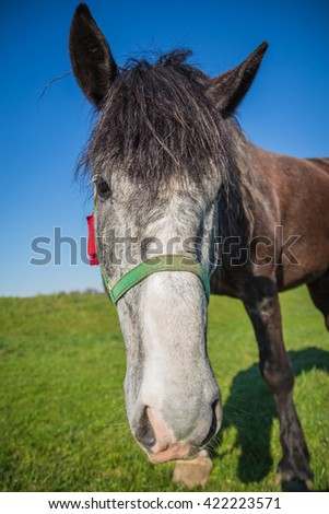 Gray face dark brown horse close up against the sky - stock photo