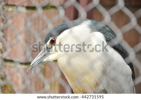 Gray Heron in cage  - stock photo