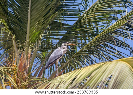 gray heron on the palm - stock photo