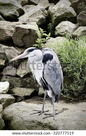 Gray Heron Over Natural Stone Background - stock photo