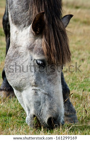 Gray horse  - stock photo