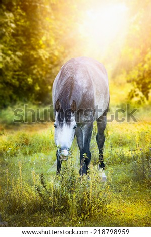 Gray horse graze on autumn landscape with sun shine