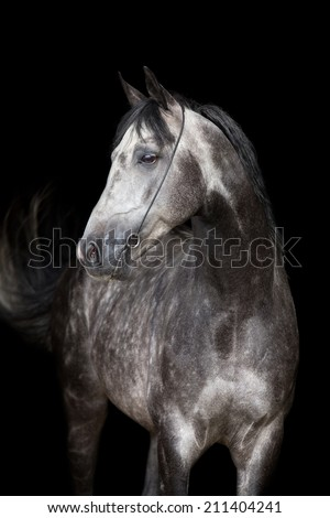 Gray horse head on black background - stock photo