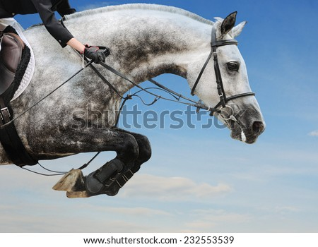 Gray horse in jumping show against blue sky - stock photo