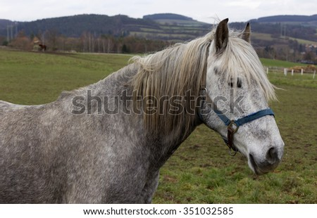 Gray Horse in the green Nature