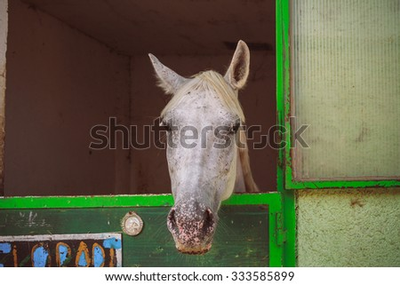Gray horse mysteriously looks out of the stall. - stock photo