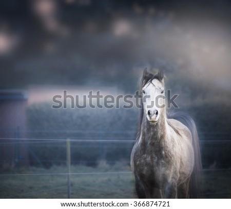 Gray horse on dark nature background - stock photo