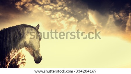 Gray horse portrait on Beautiful on sky background, banner - stock photo