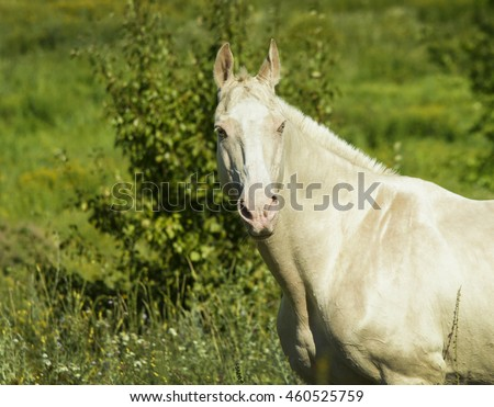 gray horse standing in a field on the green grass