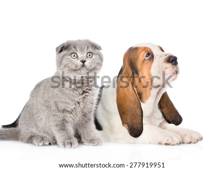 Gray kitten and basset hound puppy looking up. isolated on white background - stock photo