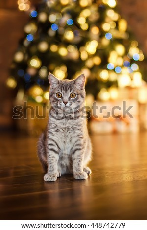 Gray kitten, Christmas and New Year