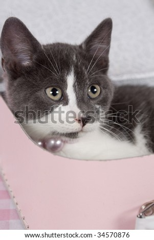 gray kitten in lunch box